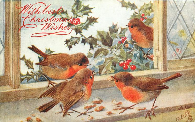 four robins, window, one outside on holly, two inside & one on sill