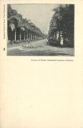 AVENUE OF PALMS, BOTANICAL GARDENS, CALCUTTA