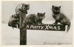 A MERRY CHRISTMAS WATCHING FOR SANTA CLAUS  four kittens perched on sign post showing