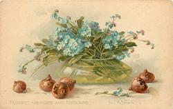 FORGET-ME-NOTS AND MEDLARS