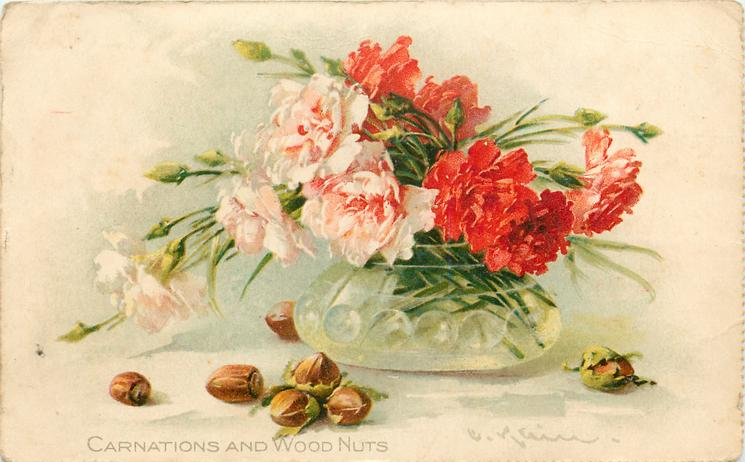 CARNATIONS AND WOOD NUTS