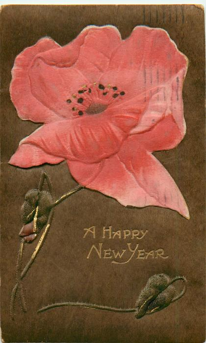 A HAPPY NEW YEAR  red poppy