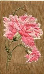 A HAPPY NEW YEAR  carnations