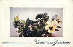 CHRISTMAS GREETINGS   pansies