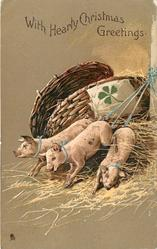 WITH HEARTY CHRISTMAS GREETINGS  three piglets climb out of basket which has green 4 leaf clover attached