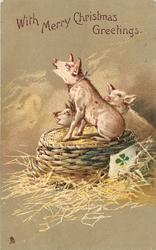 WITH MERRY CHRISTMAS GREETINGS   three piglets, one on upturned basket with 4 leaf clover, straw