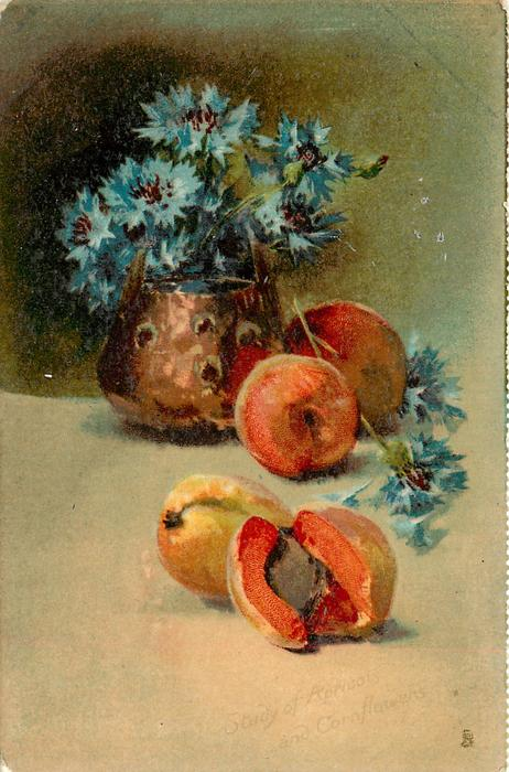 STUDY OF APRICOTS AND CORNFLOWERS