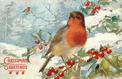 CHRISTMAS GREETINGS  close-up of robin, looking front, on snowy holly branch, another distant