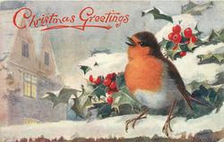 CHRISTMAS GREETINGS (2 types)  close-up of robin, looking up/left on snowy wall, holly behind, house left