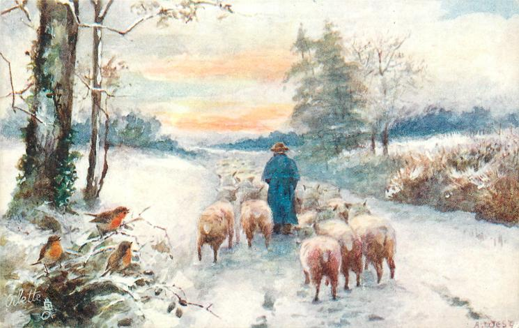 three robins left, shepherd drives sheep away down snowy road