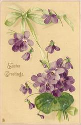 violets, green ribbon tied in bow upper left