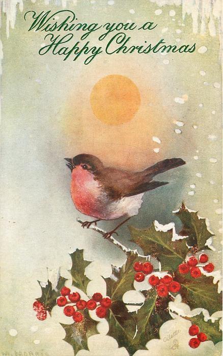 robin singing under bright sun, perching on holly