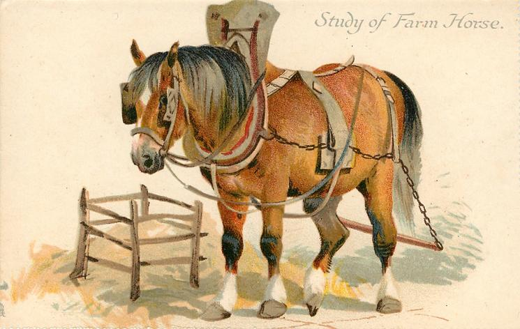 STUDY OF FARM HORSE