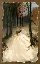 single stag on snowy road in dark woods