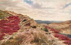 ridge of poor soil, red heather both sides of ridge, part of lake far right