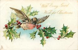 WITH EVERY GOOD WISH FOR CHRISTMAS  robin flies with large sprig of holly