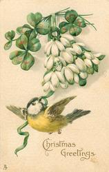 CHRISTMAS GREETINGS  yellow-tit flies holding green ribbon, snowdrops & clover above