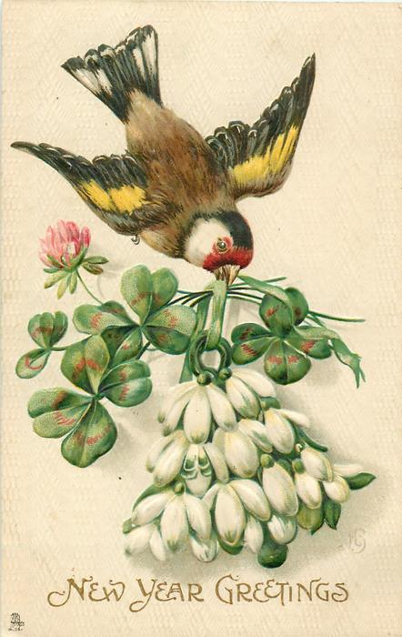 NEW YEARS GREETINGS or A HAPPY CHRISTMAS  chaffinch flies holding snowdrops & clover in beak