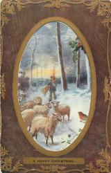 A HAPPY CHRISTMAS  sheep & boy & robin