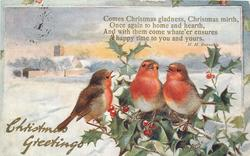 CHRISTMAS GREETINGS three robins right on holly