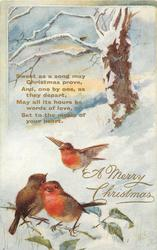 A MERRY CHRISTMAS  three robins left, one flying, tree above