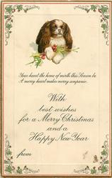 WITH BEST WISHES FOR A MERRY CHRISTMAS AND A HAPPY NEW YEAR   FROM   pekingese & holly