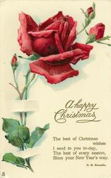 A HAPPY CHRISTMAS  red rose and three buds