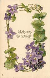 CHRISTMAS GREETINGS  circlet of purple violets, single violet left of card title, cluster lower right