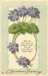 CHRISTMAS GREETINGS  violets