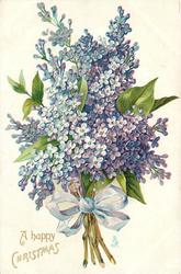 A HAPPY CHRISTMAS  bunch of lilacs, tied with blue/white ribbon