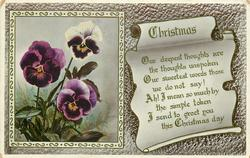 CHRISTMAS  pansies