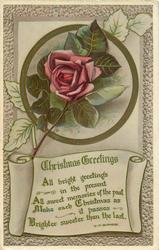 CHRISTMAS GREETINGS  pink rose