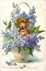 MERRY CHRISTMAS GREETINGS, dachshund's head & shoulders surrounded by lilacs in basket