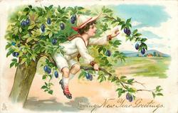 LOVING NEW YEAR GREETINGS  boy in tree picking plums