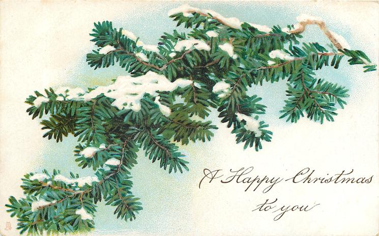 A HAPPY CHRISTMAS TO YOU  snowy evergreen branch