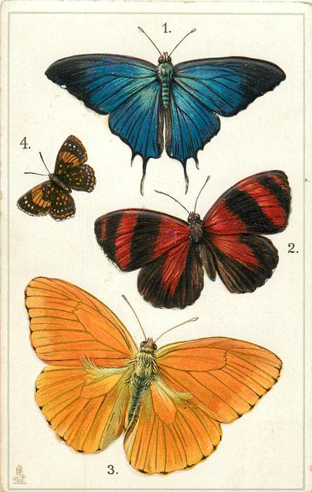 AMERICA & WEST INDIES, 1 PSEUDOLYSIS MARSYAS... 4.LEMONIUS EMYLUIS, SOUTH AMERICA