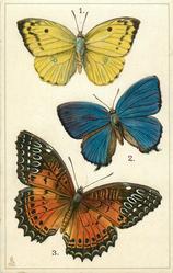 ASIA, 1.CALLIDRYAS CATILLA... 3. CETHOSIA BIBLIA, NORTHERN INDIA