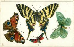 EUROPE, 1.SWALLOW-TAIL... 4. SIX SPOTTED BURNET