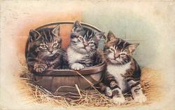 three kittens, two in basket, straw below