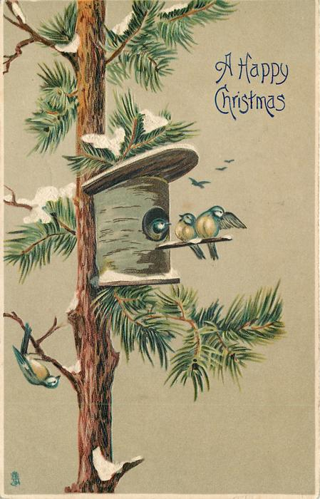 blue tits & bird house on snowy evergreen