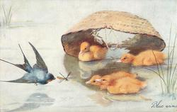 BLUE WINS  four ducklings swimming, old basket behind, swallow catches dragonfly