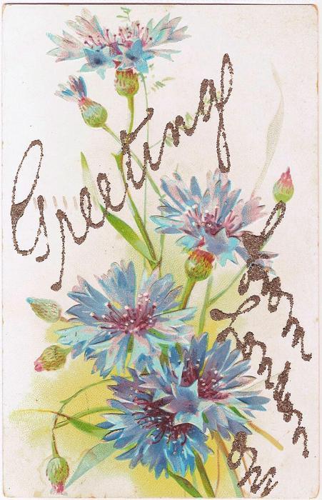 cornflowers (batchelor buttons), five blue flowers & buds