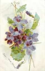 purple violets, three stalks & bud bottom right