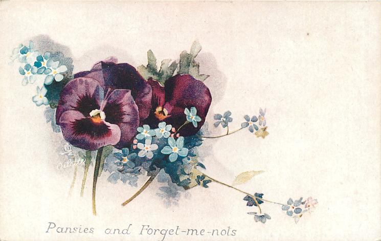 PANSIES AND FORGET-ME-NOTS  purple flowers centre left