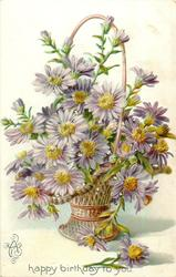 asters, violet flowers with yellow centers in wicker basket, one flower on table