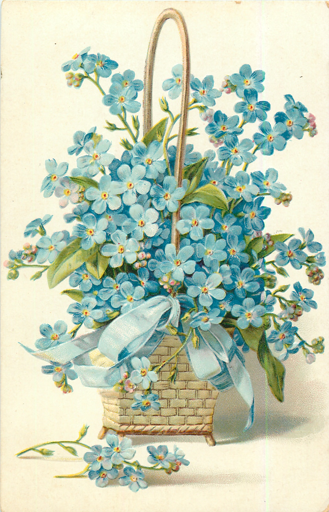 forget-me-nots, in square wicker basket, blue ribbon ...