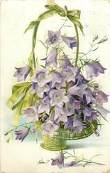 harebells, purple flowers in green wicker basket with green bow on top, one spray on table