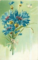 bunch of blue cornflowers (batchelor buttons), butterfly upper right