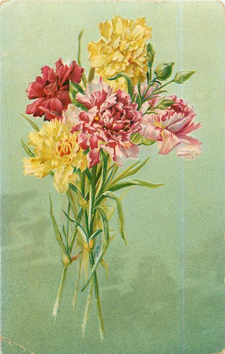 carnations, two pink, two yellow, one red, buds above
