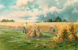 pastoral/ harvest scene, sheaves of wheat stooked right and center, man holds scythe, uncut grain behind